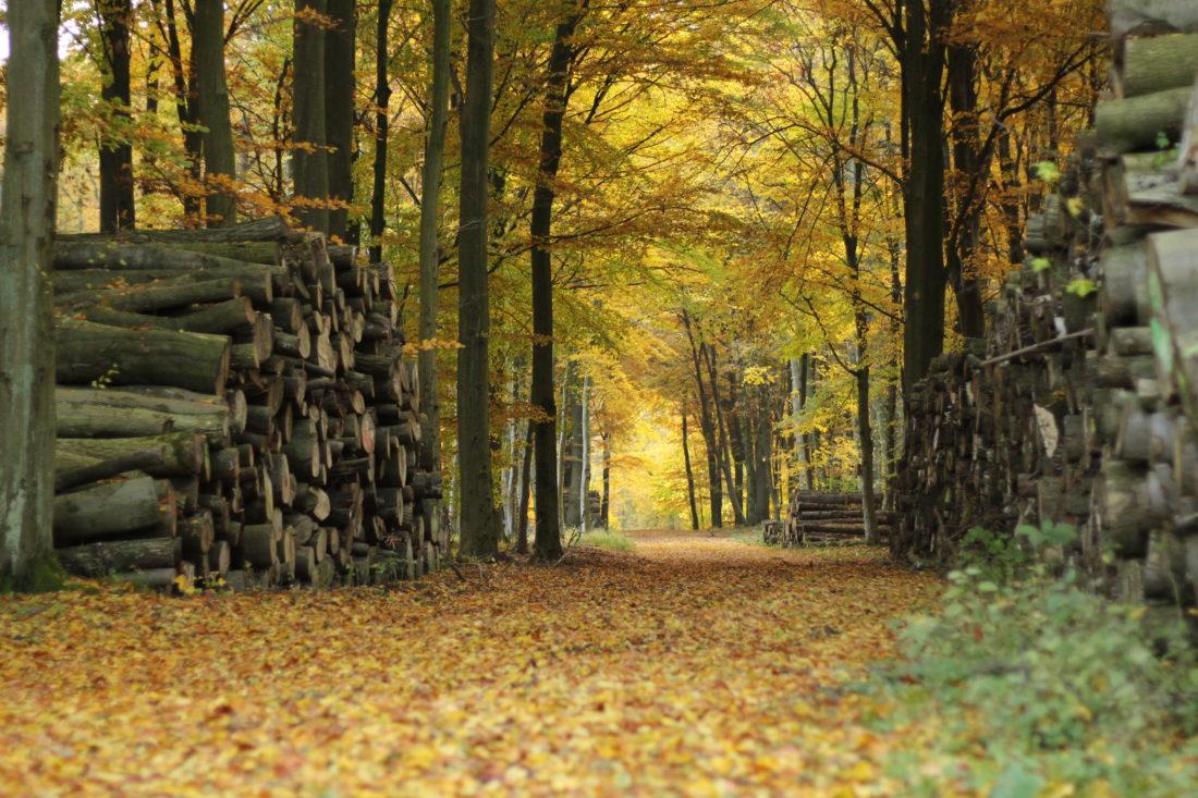 Holz, Wald, Weg, Herbst, Gelb, bunt